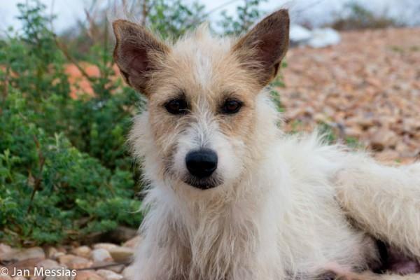 A cadela parece um pouco desnutrida, mas com um pouco de cuidado e carinho deve voltar à sua beleza natural!  Fotos: Jan Messias