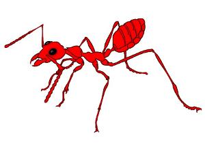CAUSO – O ataque das formigas motociclistas! Por Mário Sérgio Figueredo